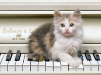 In-Home Piano Lessons Available