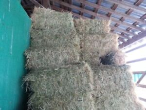 100% Grass Hay for Sale