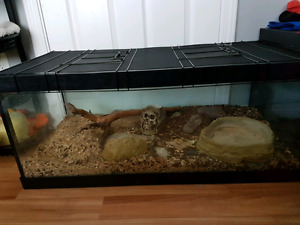 Large/ medium animal tank and stone dishes