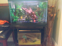 2 Fish Tanks With Stand