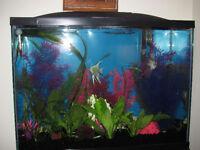 tall 40 GAL fish tank