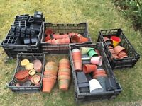 Various plant pots and seeding trays