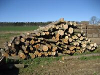 Fresh cut logs