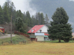 Active Cattle Ranch in Greenwood BC