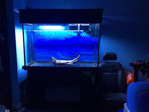 110 gallon aquarium with stand and light