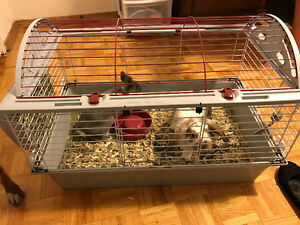 2 Boy Bunnies for Sale + Cage + Supplies