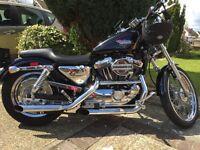 Harley Davidson 1200cc custom sportster
