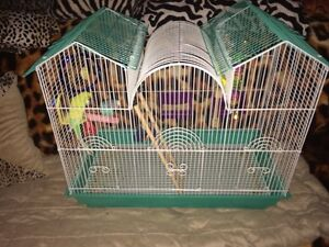 4 budgies and 2 cages for sale