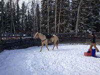 Help Wanted on Horse Ranch