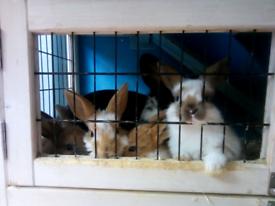 5 little baby bunnies