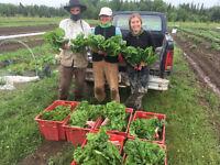 Organic Vegetable Farming Internship