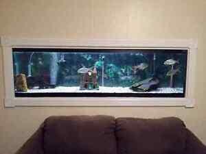 Tropical Fish Tank Cleaning Service London Ontario image 4