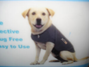 Thunder Shirt for a Dog - The Best Solution for Dog Anxiety