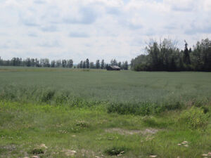 Lush 1/4 Section near Mackay/Chip Lake - Yellowhead County, AB Edmonton Edmonton Area image 2