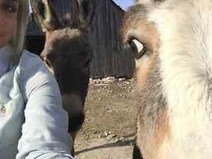MINIATURE DONKEYS FOR SALE