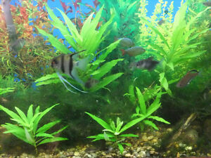 "Aquarium plants   ""SOLD"""