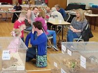 Pet Rat Show, and fun educational family day out - 25/2/17