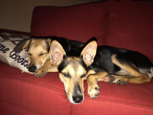 2 sisters need a home