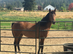 Young Filly for sale