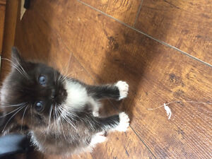 2 kittens available to good homes