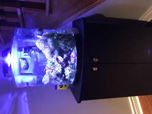 Aquarium eau salée 10 gal