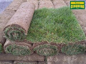Tourbe – Rouleaux de Gazon Kentucky Bluegrass