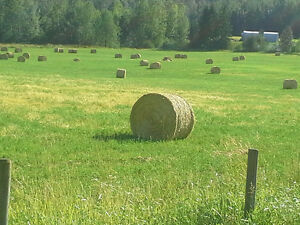 Quality Horse Hay for Sale - Tested