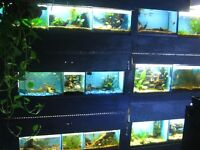 HUGE SELECTION OF FISH