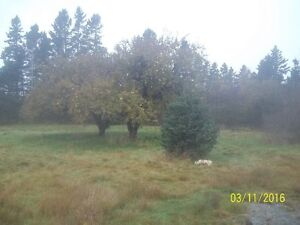 Very private 6.5 acres with a brook!!