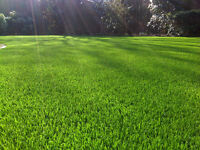 Spring cleanup - lawn care - landscaping (FREE QUOTES)
