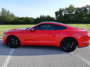 2019 Mustang Ecoboost in Brand New Condition