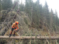 Danger Tree Falling Services