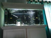 Large white fish tank / aquarium