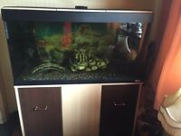 Fluval Fish tank and accessories plus fish