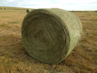 Nice Mix Round Bale Hay For Sale