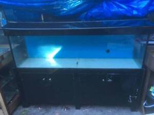 FISH TANK 5 FOOT Holt Belconnen Area Preview