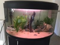 90 litre fish tank with everything needed