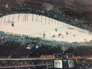 Toronto Roadrunners hockey photo; 1st puck drop, Ricoh Colis