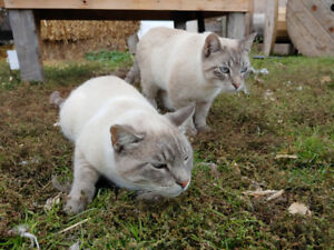 2 Beautiful Adult Cats for Sale