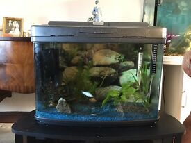 Dome shaped aquarium with stand