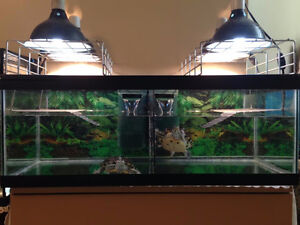 2 Red Ear Slider Turtles With Tank Looking For a New Home