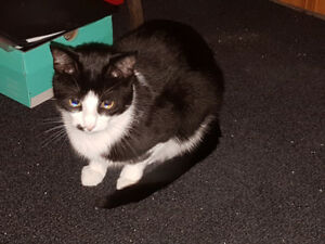 Reward - Lost Cat (Stoney Creek)