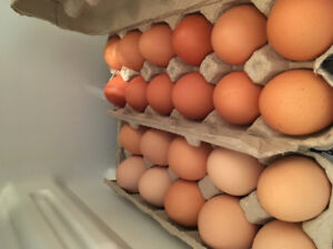 FREE RANGE EGGS-buy local