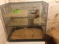 Ferret gill +cage