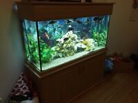 Cichlids Aquarium