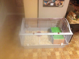 A bunny with cage and food