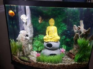 Marineland® 38 Gallon Aquarium with Ornaments and Cichlids