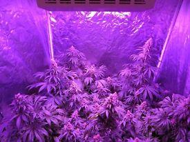 Full LED grow kit