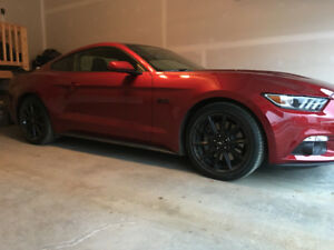 RUBY RED GT MUSTANG