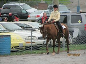 All around 11yr old AQHA Mare